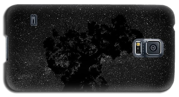Empty Night Tree Galaxy S5 Case