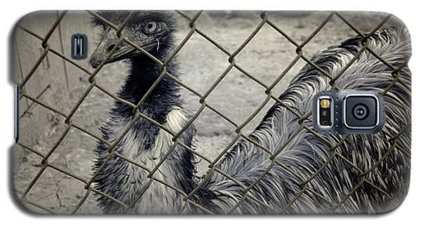 Emu At The Zoo Galaxy S5 Case