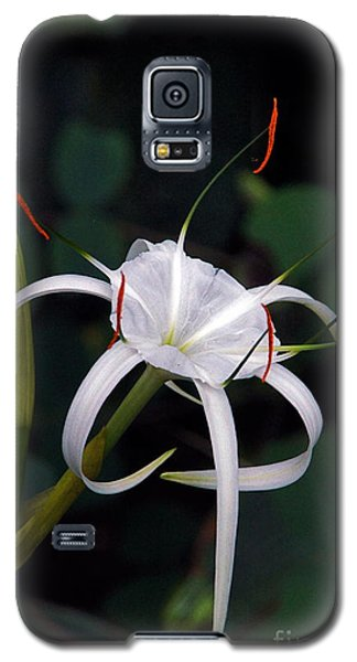 En Pointe Galaxy S5 Case by Byron Varvarigos