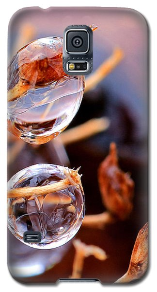 Encapsulated By Ice Galaxy S5 Case by Christopher McKenzie
