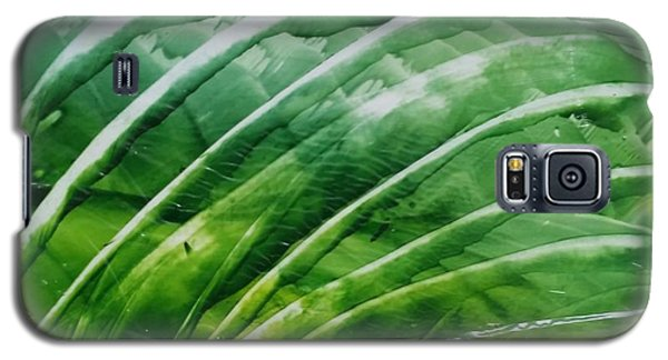 Encaustic Abstract Green Fan Foliage Galaxy S5 Case