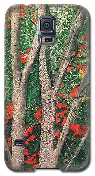 Enchanted Birches Galaxy S5 Case