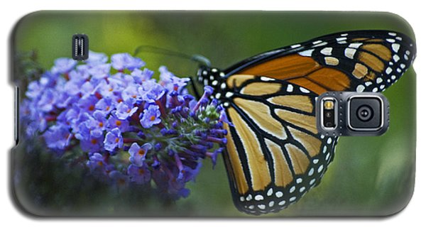 Galaxy S5 Case featuring the photograph Enchanting Monarch by Elsa Marie Santoro