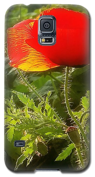 Red Poppy At Sunset Galaxy S5 Case