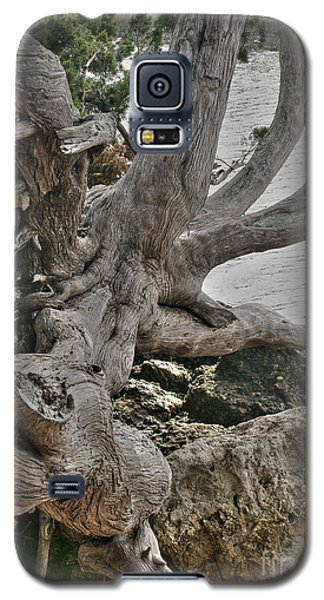 Galaxy S5 Case featuring the photograph Endure by Rebecca Hiatt