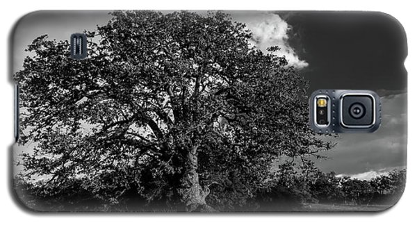 Engellman Oak Palomar Black And White Galaxy S5 Case