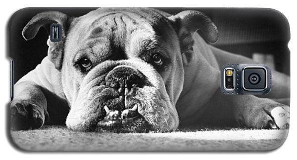 English Bulldog Galaxy S5 Case