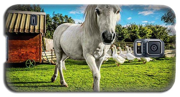 English Gypsy Horse Galaxy S5 Case