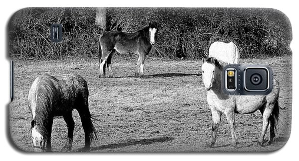 English Horses Galaxy S5 Case