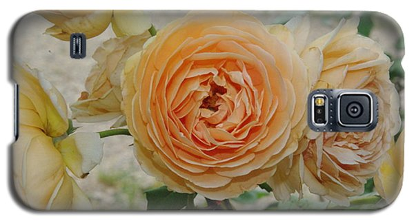 English Rose Apricot Crown Princess Margareta 2 Galaxy S5 Case by Robyn Stacey