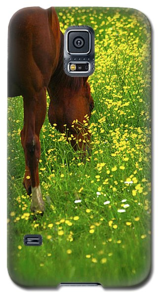 Galaxy S5 Case featuring the photograph Enjoying The Wildflowers by Karol Livote