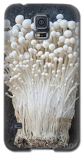 Enoki Mushrooms Galaxy S5 Case by Elena Elisseeva