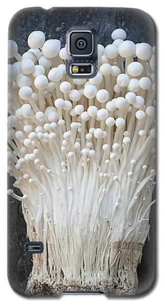 Enoki Mushrooms Galaxy S5 Case by Elena Elisseeva