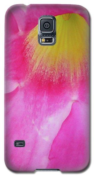 Entering Mandavilla Galaxy S5 Case