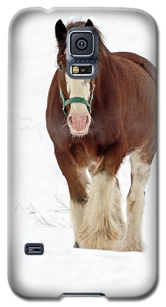 Galaxy S5 Case featuring the photograph Equus Caballus.. by Nina Stavlund