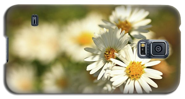 Erigeron Annuus Daisy Like Wildflower Galaxy S5 Case
