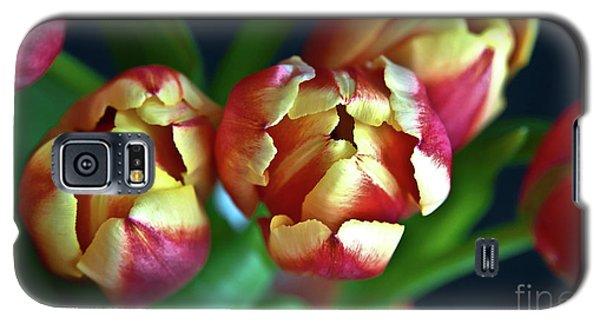 Eternal Sound Of Spring Galaxy S5 Case