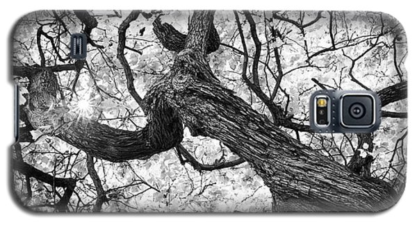 Ethereal Maple Galaxy S5 Case