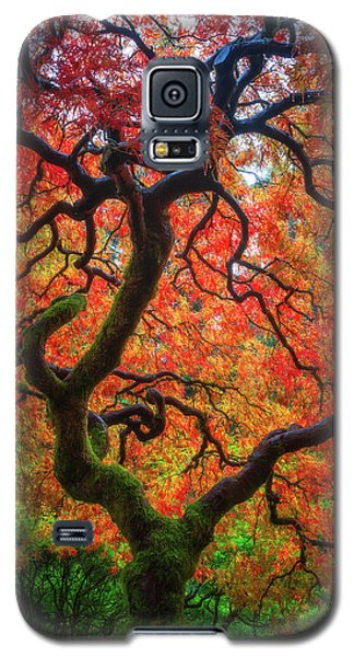 Galaxy S5 Case featuring the photograph Ethereal Tree Alive by Darren White