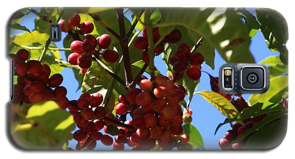 Ethiopian Coffee Beans Galaxy S5 Case