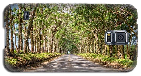 Eucalyptus Tree Tunnel - Kauai Hawaii Galaxy S5 Case