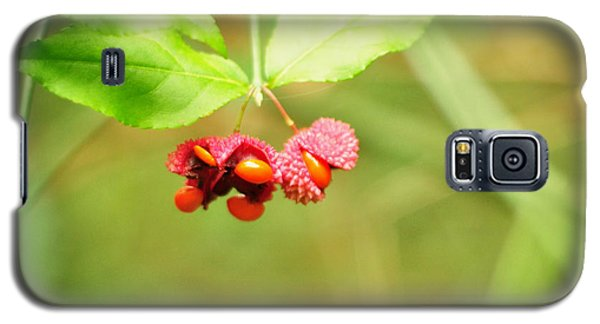Euonymus Americanus  American Strawberry Bush Galaxy S5 Case by Rebecca Sherman