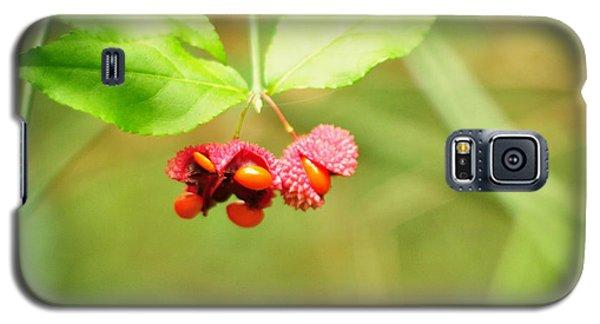 Euonymus Americanus  American Strawberry Bush Galaxy S5 Case