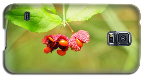 Euonymus Americanus  American Strawberry Bush Galaxy S5 Case