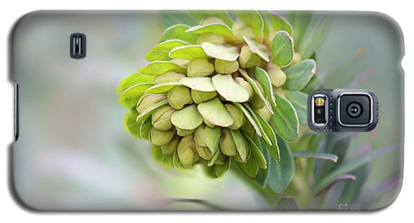 Galaxy S5 Case featuring the photograph Euphorbia by Linda Lees