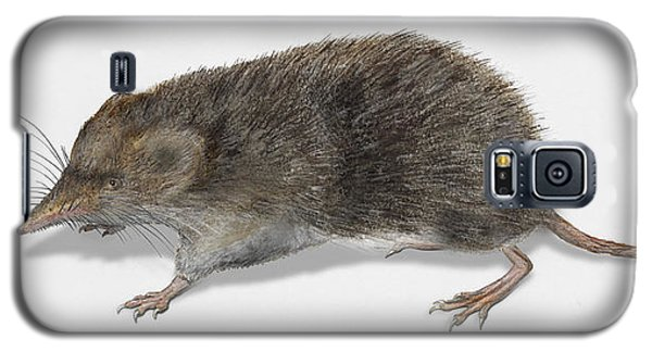 Eurasian Common Shrew Sorex Araneus - Musaraigne Carrelet - Musa Galaxy S5 Case
