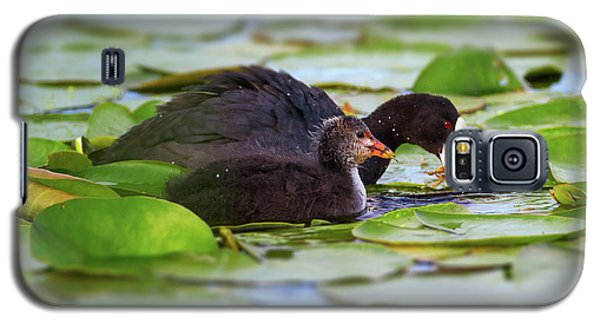 Eurasian Or Common Coot, Fulicula Atra, Duck And Duckling Galaxy S5 Case by Elenarts - Elena Duvernay photo