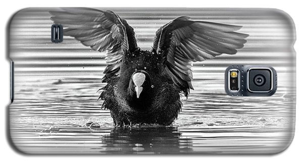 Eurasian Or Common Coot, Fulicula Atra, Duck Galaxy S5 Case