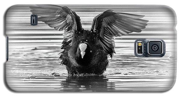 Eurasian Or Common Coot, Fulicula Atra, Duck Galaxy S5 Case