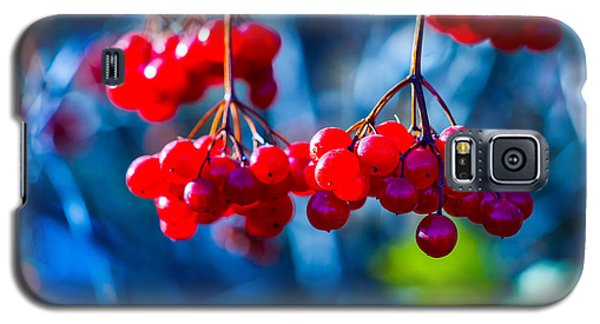 Galaxy S5 Case featuring the photograph European Cranberry Berries by Alexander Senin