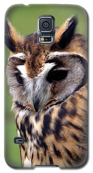Eurasian Striped  Owl Galaxy S5 Case by Stephen Melia
