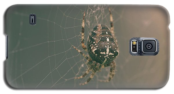 European Garden Spider B Galaxy S5 Case