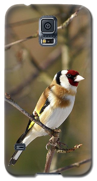 European Goldfinch 2 Galaxy S5 Case