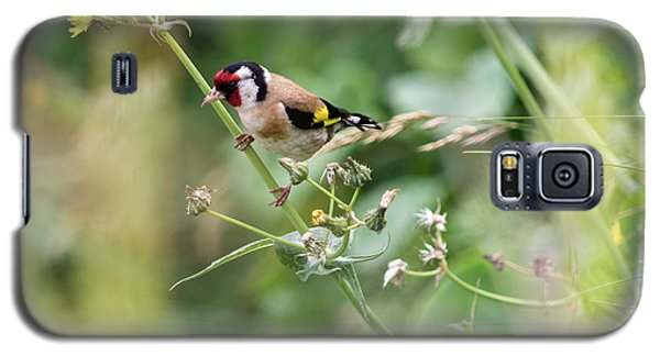 European Goldfinch Perched On Flower Stem B Galaxy S5 Case