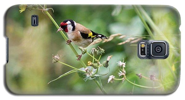 European Goldfinch Perched On Flower Stem B Galaxy S5 Case