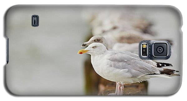 Galaxy S5 Case featuring the photograph European Herring Gulls In A Row Fading In The Background by Nick Biemans
