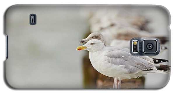 European Herring Gulls In A Row Fading In The Background Galaxy S5 Case