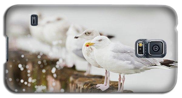 European Herring Gulls In A Row  Galaxy S5 Case