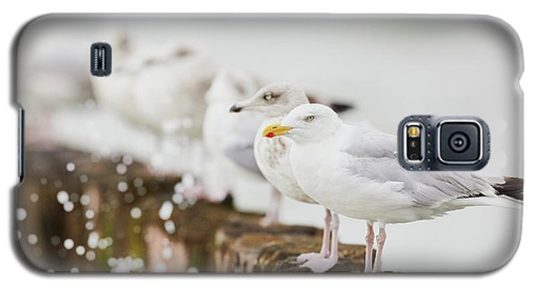 European Herring Gulls In A Row  Galaxy S5 Case