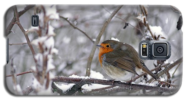 European Robin In The Snow At Christmas Galaxy S5 Case