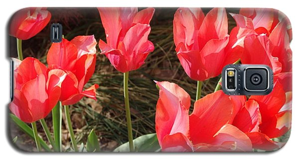 Even More Temple Beauty Tulips Galaxy S5 Case by Rod Ismay