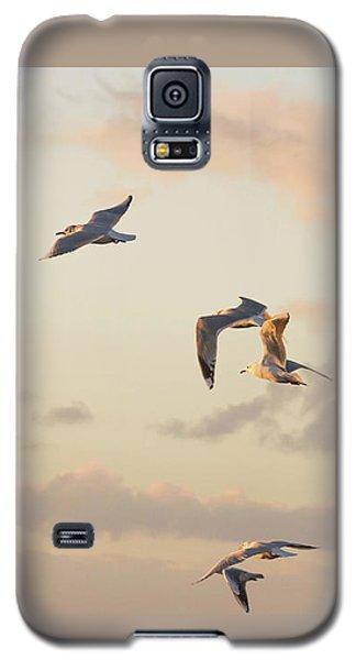Evening Gulls Galaxy S5 Case