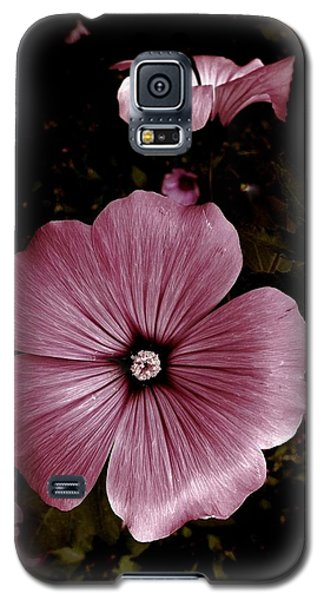 Galaxy S5 Case featuring the photograph Evening Rose Mallow by Danielle R T Haney