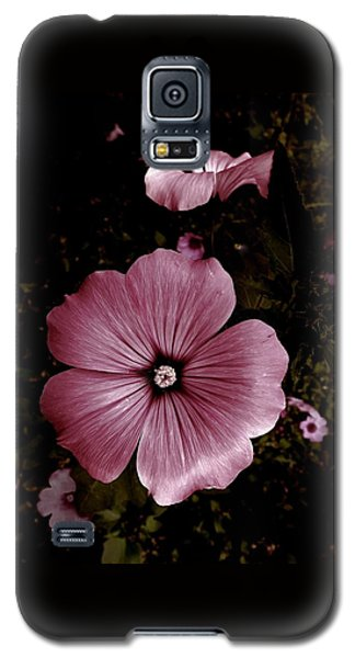 Evening Rose Mallow Galaxy S5 Case by Danielle R T Haney
