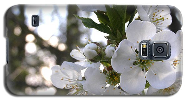 Galaxy S5 Case featuring the photograph Evening Show - Cherry Blossoms by Angie Rea