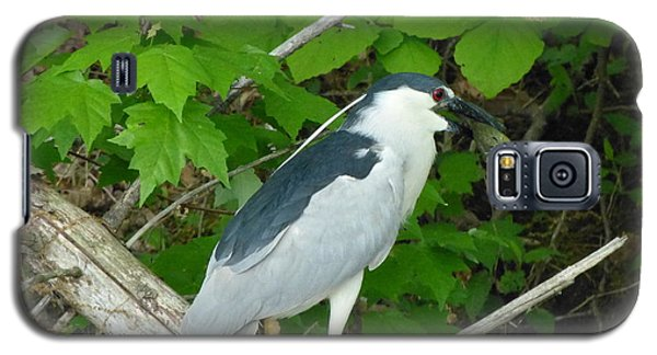 Galaxy S5 Case featuring the photograph Evening Snack For A Night Heron by Donald C Morgan